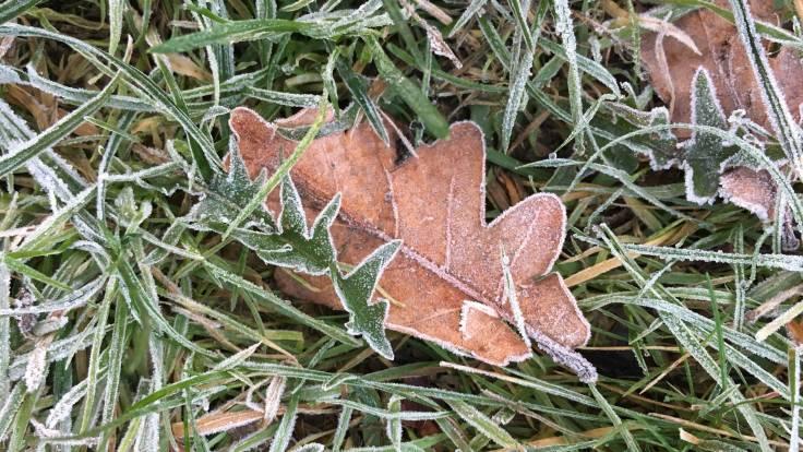 Frosty leaves on frosty ground