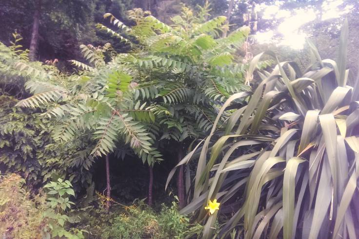 Jungly forest garden, with spiky leafed plant and opposing leaf tree