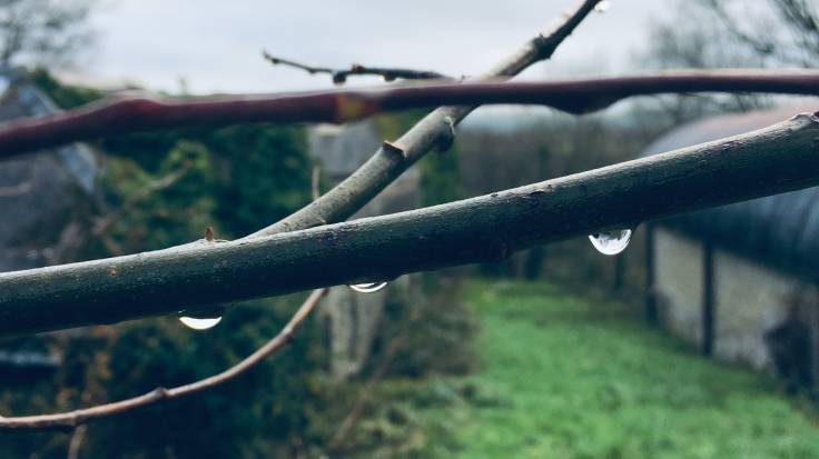 Water drops on branches in front of barn