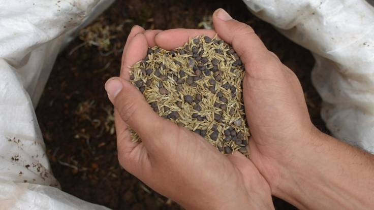 Hand holding mixed seed over bag