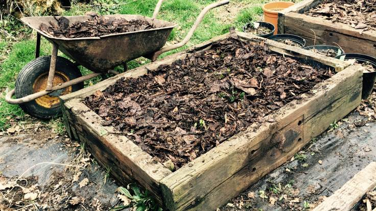 Small raised bed with bark mulch and small plants, old wheelbarrow behind