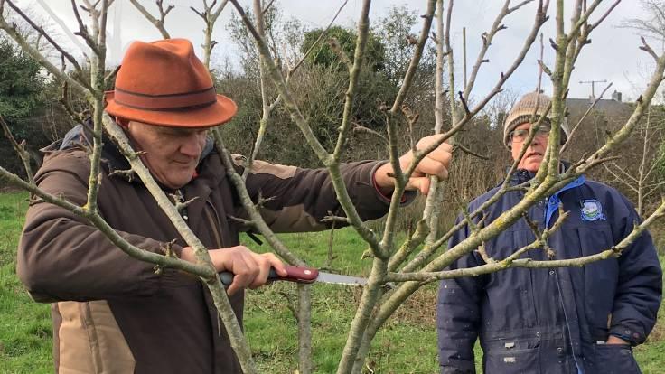 Man pruning goblet shape fruit tree with onlooker