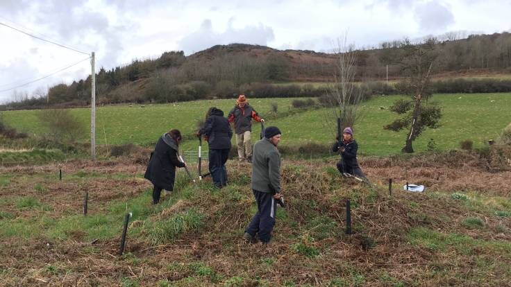 People planting trees on bracken covered mound, field & hill in background