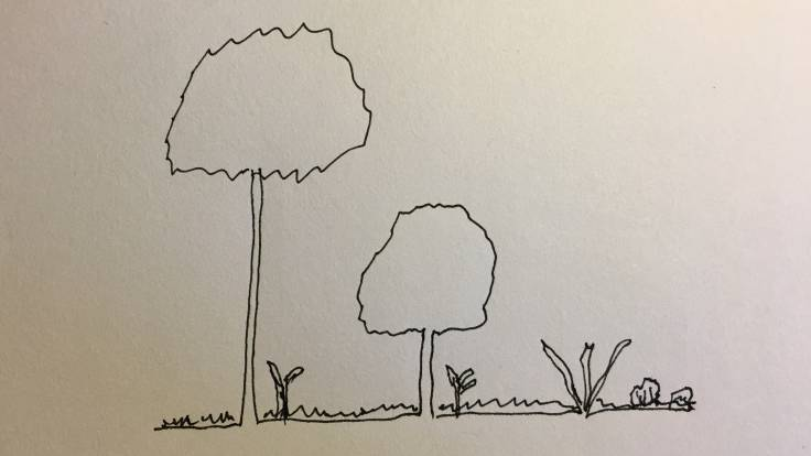 Line drawing of tall tree next to medium tree next to spiky shrub in profile, ground cover on the ground