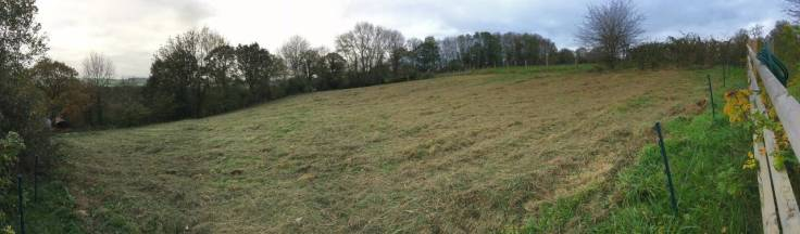 Panorama of mown field bordered with trees