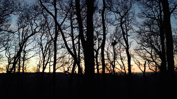 Sunrise through silhouette trees