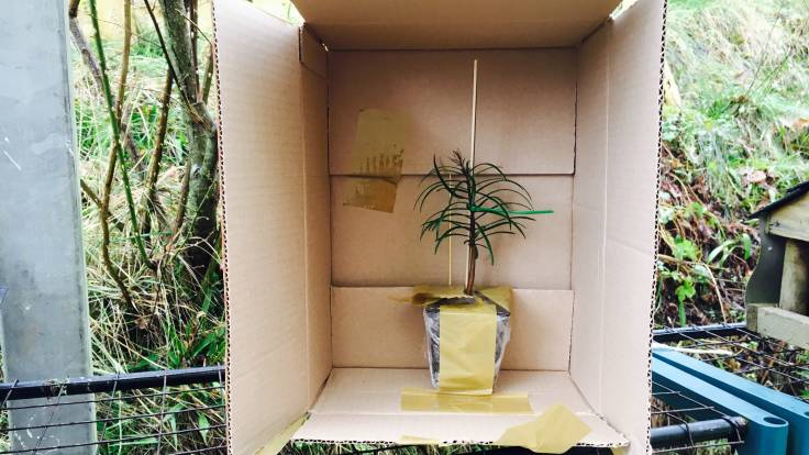 Small evergreen plant in a cardboard box
