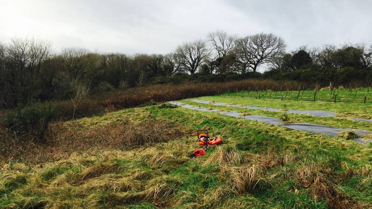 Brush cutter and rough pasture foreground, sheet mulch and coppice background, trees on horizon