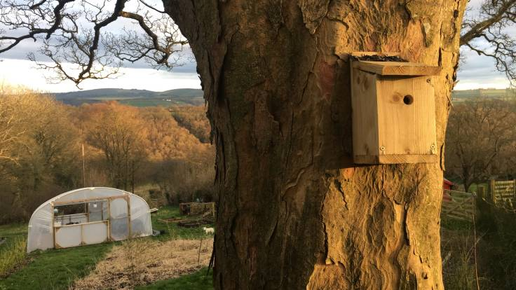 Photo of bird box on back of scyamore tree in sunset, looking out past polytunnel to valley beyond
