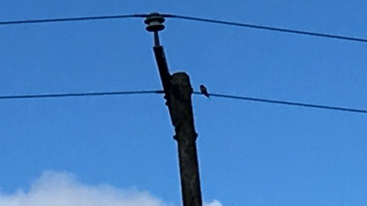 Blurry photo of swallow on power line
