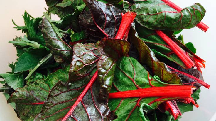 Close up of rainbow chard on top of nettle in plastic bowl