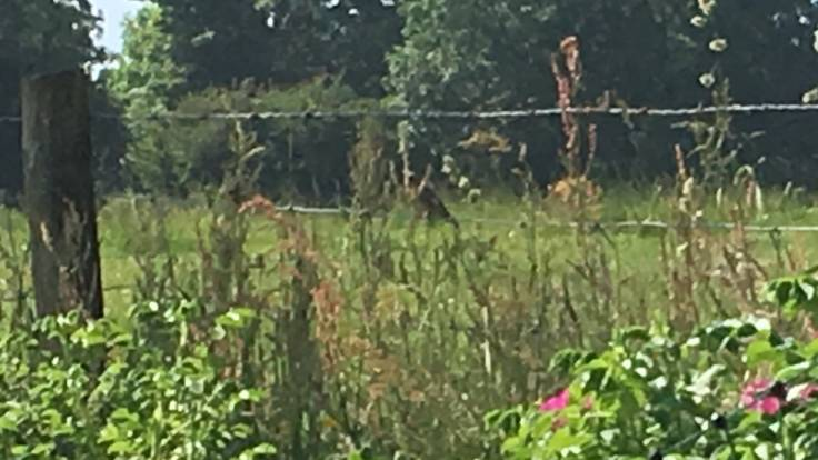 Blurry photo of Goldfinch on farming fence eating seed heads