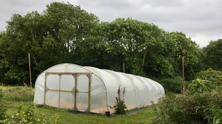 Polytunnel with closed doors, windy trees in background