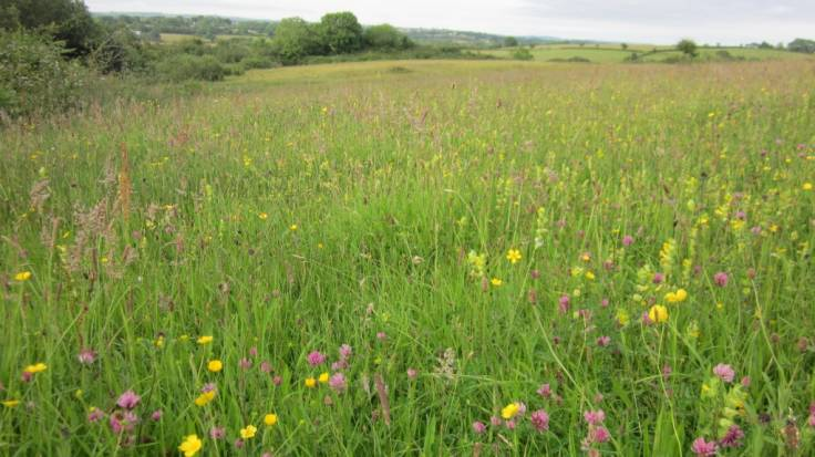 Photo of wild flower meadow with rolling landscape in background
