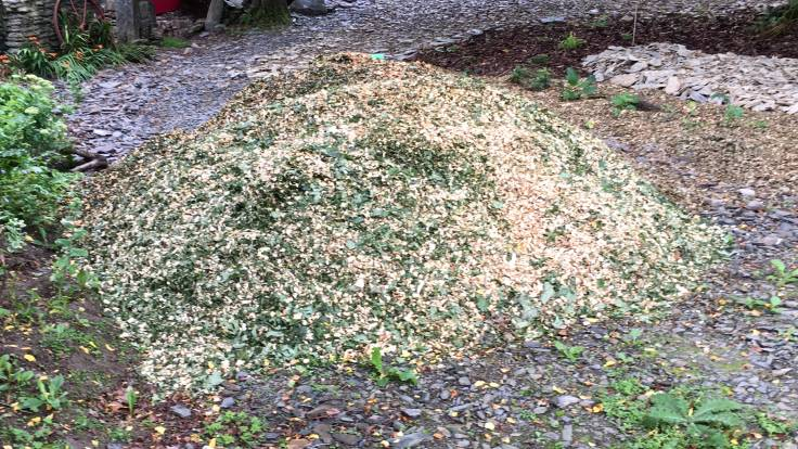 Pile of greenish wood chip on a drive