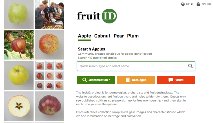 Screenshot of FruitID.com