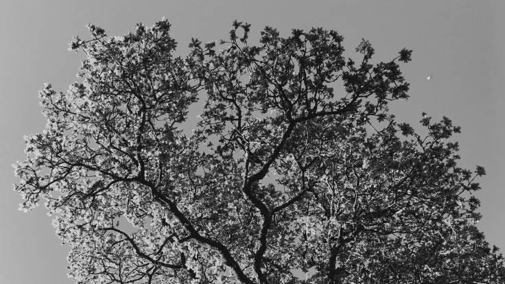 Black and white photo of tree branches against the sky