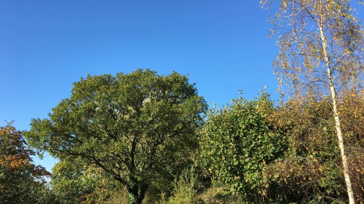 Blue sky over tree tops