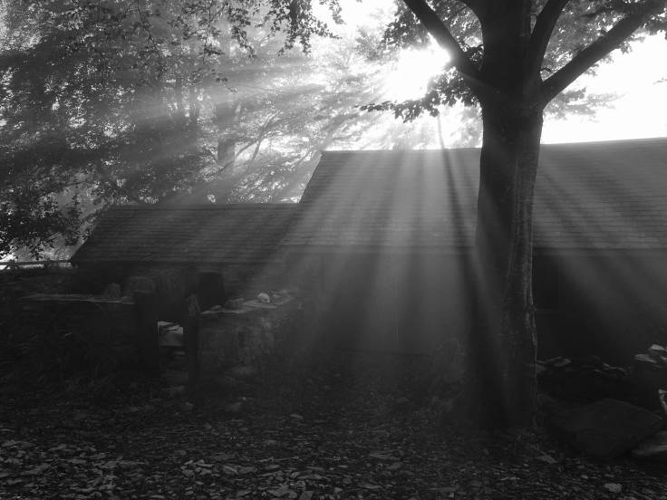 Sunbeams over old outbuildings, through tree