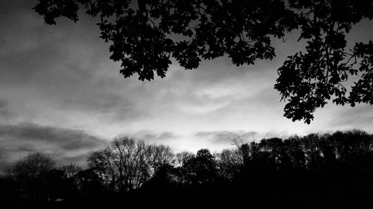 Black & white photo of sunset over trees, beneath branches