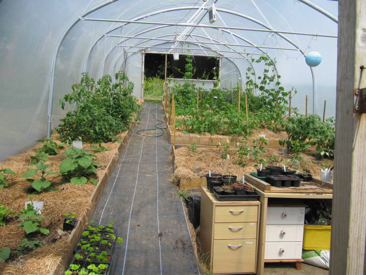 Inside of polytunnel, lots of crops