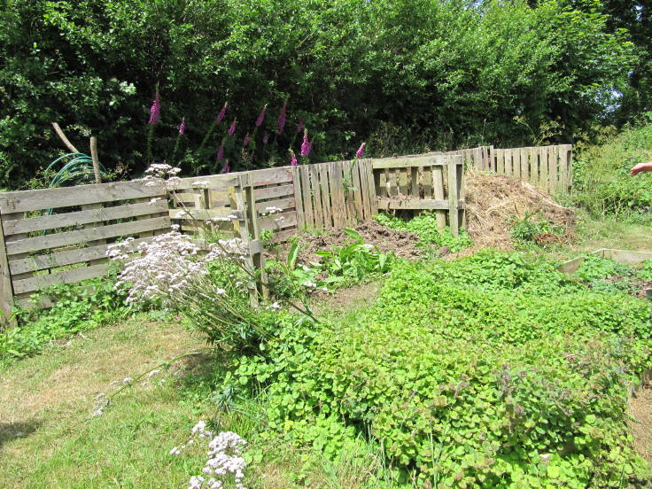 3 bay compost bins made out of pallets, propagation bed in foreground rather swamped with alefoot plant
