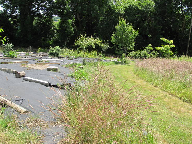 Curved grass path in centre, long grass to the right, sheet mulched area to the left, mature trees in backgorund