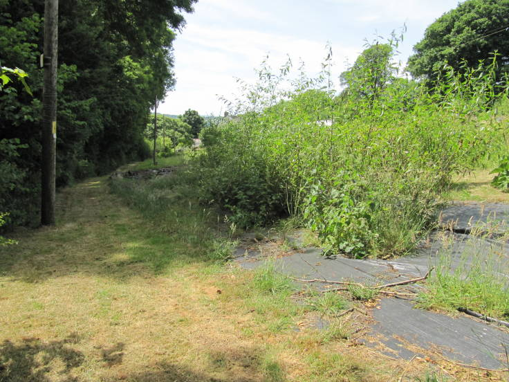 Grass path with mature trees and electricity pole to left, sheet mulched area and young willow coppice to right
