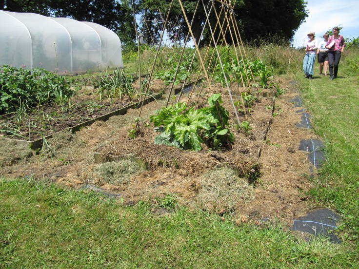 Raised beds with bean poles, polytunnel to left, people walking down from the right
