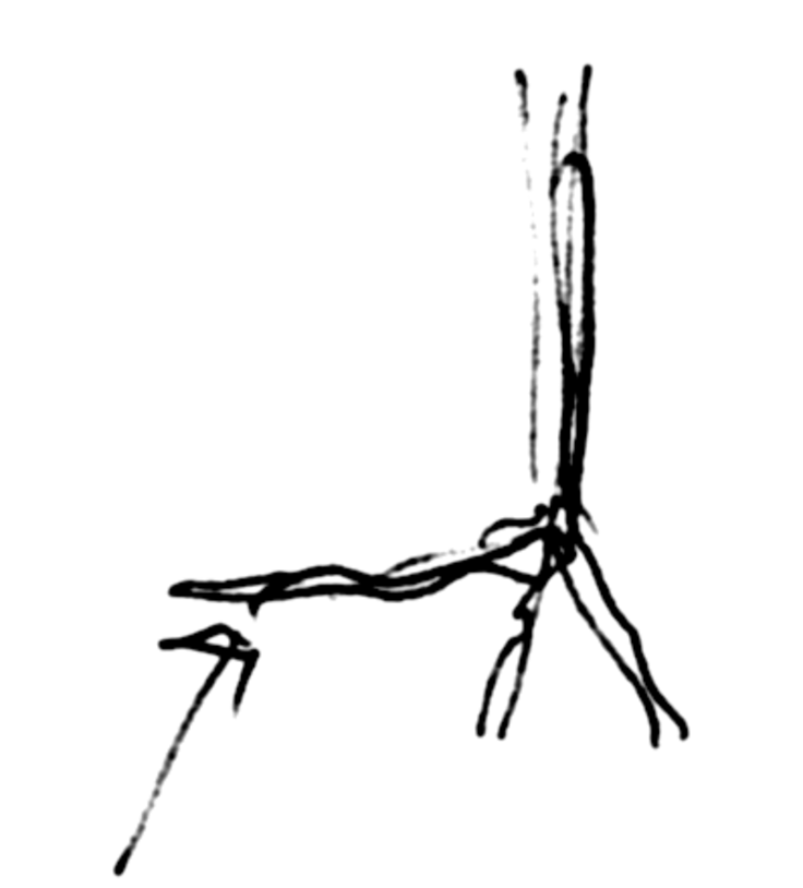 Plant the lead root _toward_ the direction of the prevailing wind