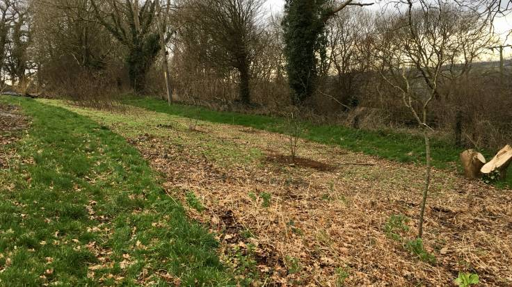 Newly planted trees in recently mulched beds