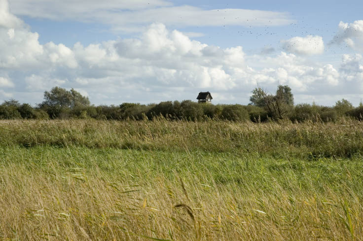 Flat landscape with grassland & reeds, with distant bird hide visible poking up above trees