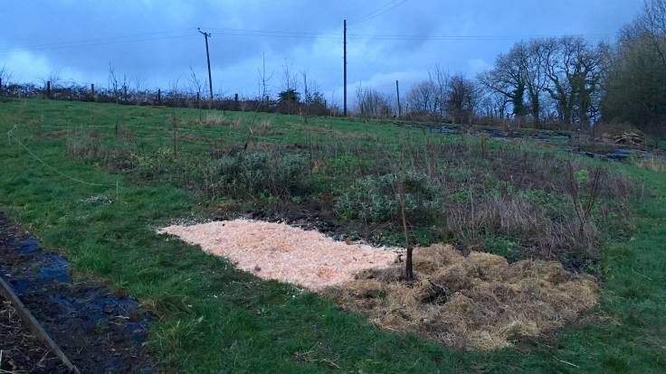 Two deturfed areas mulched with hay and wood shavings