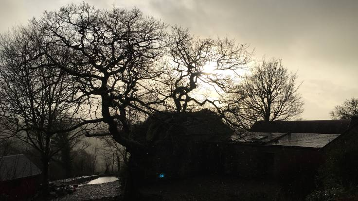 Outbuildings, bare tree in silhouette against sun