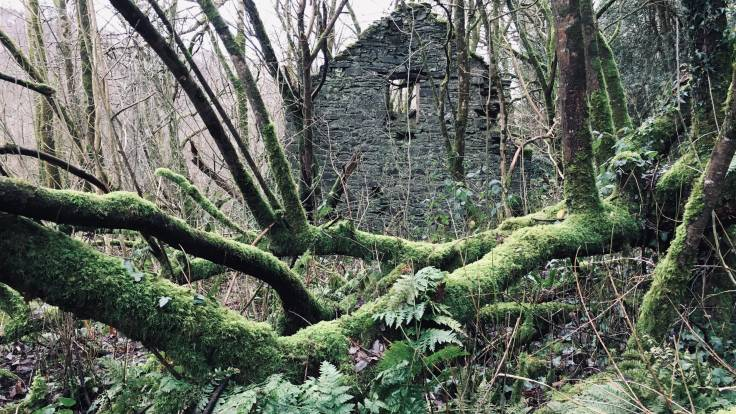 Stone ruin through mossy bare tree