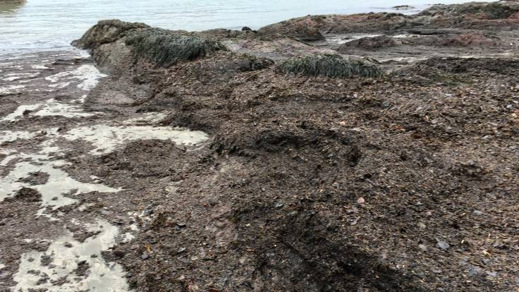 Thick deposits of leaf litter and seaweed on the bich