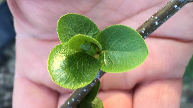 Hand under tree leaf