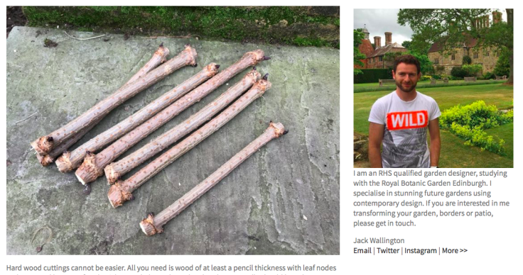 Screenshot of Jack Wallington's blog post on hardwood cuttings