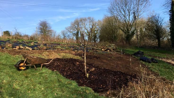 Bark mulch on bare corner of forest garden