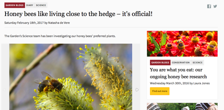 "Screenshot of Botanic Garden Wales blog post ""Honey bees like living close to the hedge - it's official"""
