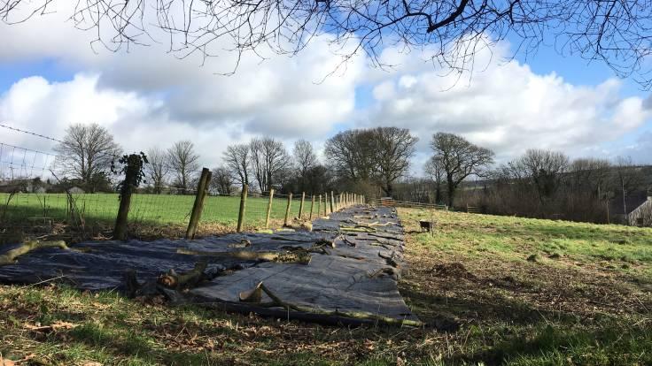 Sheet mulch along farmers fence