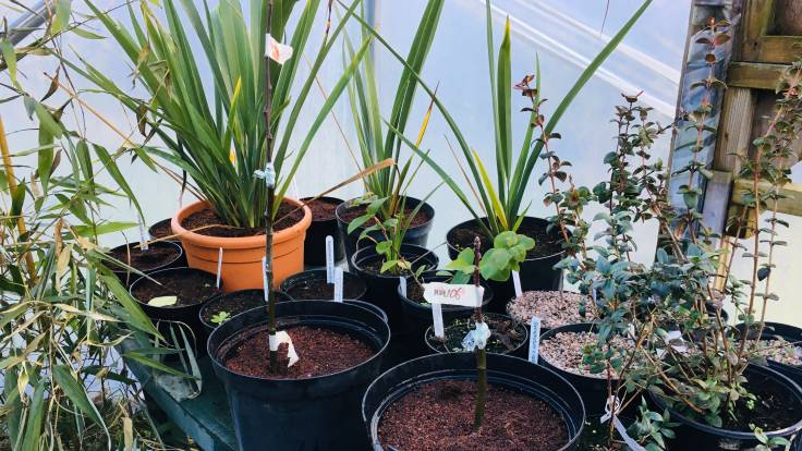 Pots in the polytunnel