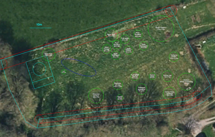 Satellite photo of field overlayed with forest garden CAD plan