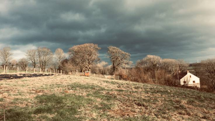 Photo of field with trees and house in middle distance