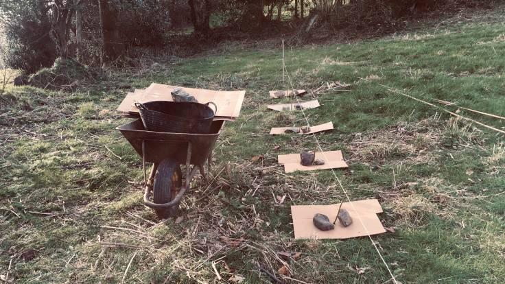 Five Yellow Dogwood cuttings in situ with cardboard mulch mats