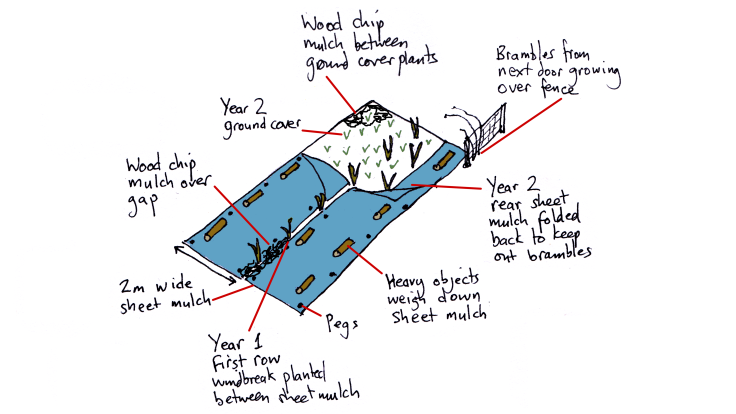Illustration showing how to sheet mulch new windbreak hedge in weedy area