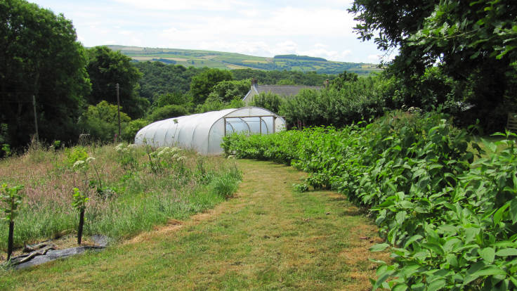 Photo of curved hedge, polytunnel, meadow and hills in distance
