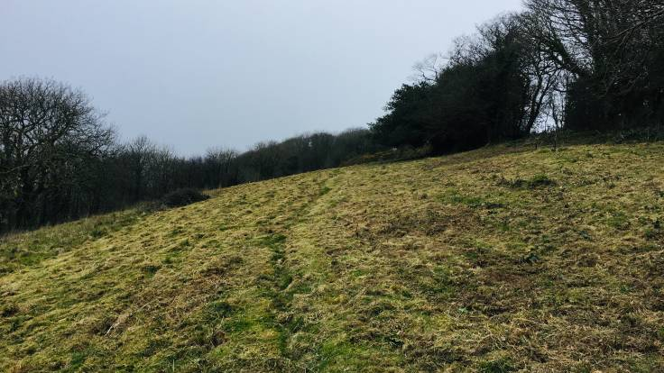 Freshly mown meadow, trees in background