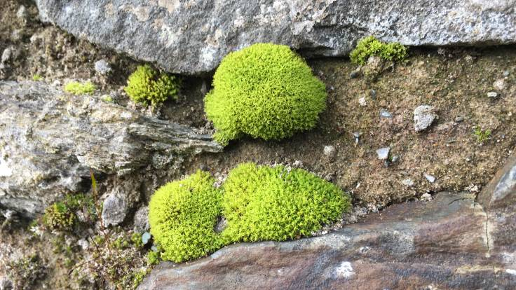 Close up of moss on wall