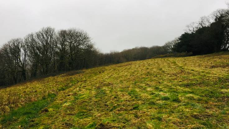 Freshly mown meadow in late winter